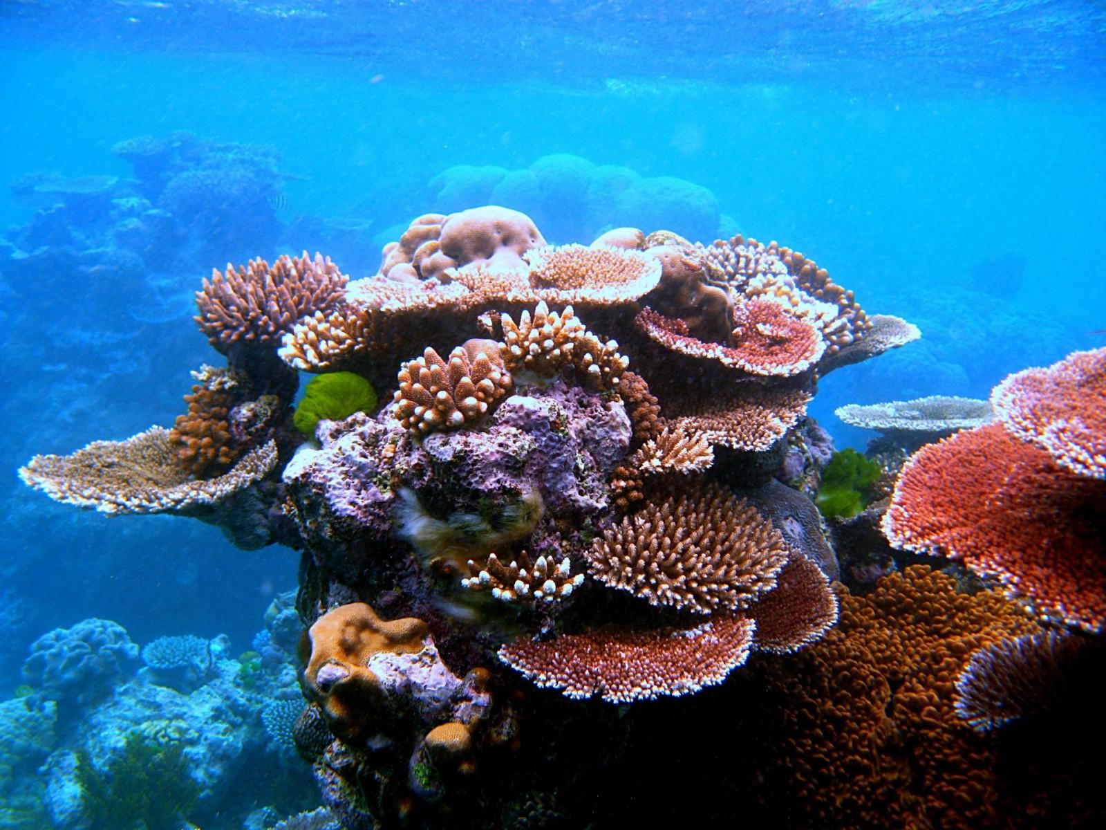 190208082139coral-outcrop-flynn-reef.jpg