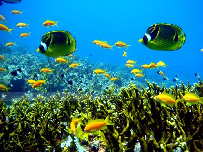190208082254blue-bay-marine-park.jpg